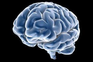 cervello_1