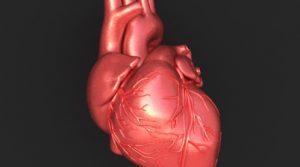 cuore-umano