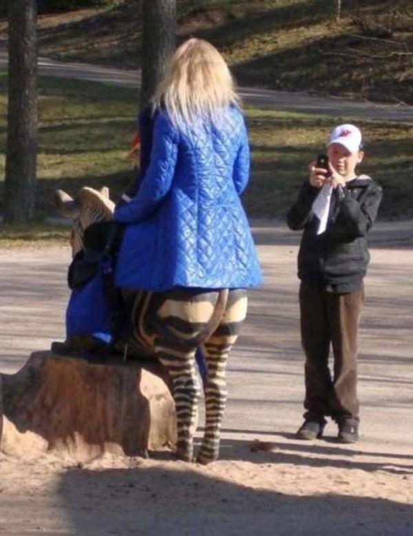 donna-zebra